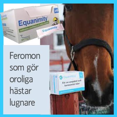 lugnande för häst